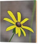 Yellow Star Wood Print