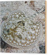 Yellow Stingray In Caribbean Sea Wood Print