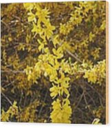Yellow Strand Wood Print