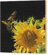 Yellow Sunflowers Wood Print