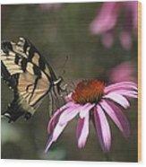 Yellow Swallowtail And Purple Coneflower Wood Print