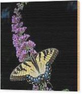 Yellow Swallowtail Wood Print