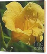 Yellow Tiger Lily Wood Print
