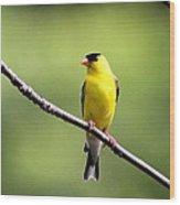 Yellow Tux Wood Print