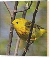 Yellow Warbler II Wood Print