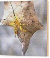 Yellow Wasp Wood Print