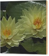 Yellow Water Lilies Wood Print