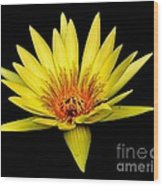 Yellow Water Lily Wood Print by Nick Zelinsky