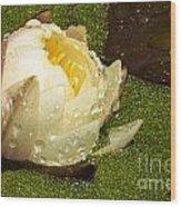 Yellow Waterlily Bud Wood Print