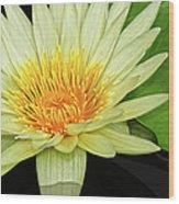 Yellow Waterlily Wood Print