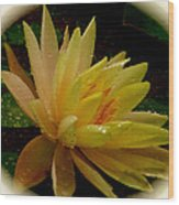 Yellow Waterlily Macro Wood Print