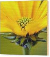Yellow Wild Flower - Side Wood Print