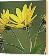 Yellow Wildflower 2 Wood Print