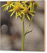 Yellow Wildflower At Crater Lake Wood Print