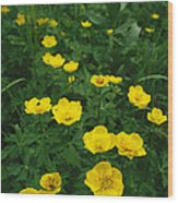 Yellow Wildflowers Blooming In Lush Wood Print