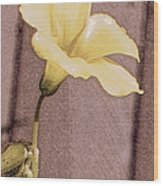 Yellow Wood Sorrel Wood Print