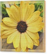 Yellow Wow Wood Print