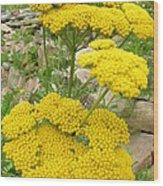 Yellow Yarrow Wood Print