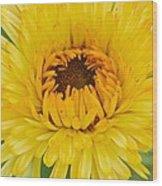 Yellow Zinnia 9494 4286 Wood Print