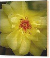 Yellowrose Wood Print