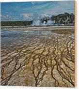 Yellowstone Blood Vessels Wood Print by Dan Mihai