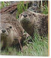 Yellowstone River Otters Wood Print