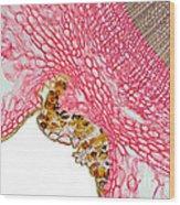 Yew Stem Wood Print