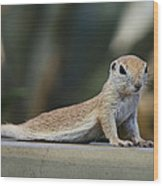Yoga Ground Squirrel Style Wood Print