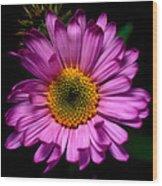 Yoho - Subalpine Fleabane Wildflower  Wood Print