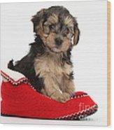 Yorkipoo Pup Wood Print