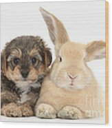 Yorkipoo Pup With Sandy Rabbit Wood Print