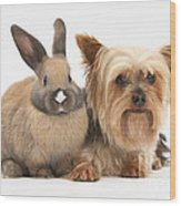 Yorkshire Terrier And Young Rabbit Wood Print