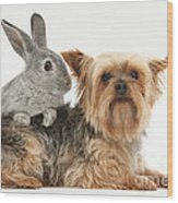Yorkshire Terrier And Young Silver Wood Print