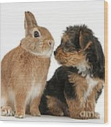 Yorkshire Terrier Pup With Rabbit Wood Print