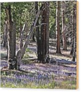 Yosemite Lupin Wood Print