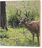 Yosemite Mule Dear Wood Print