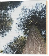 Yosemite Skyline Wood Print