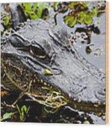 Young Alligator Wood Print
