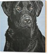 Young Black Labrador Wood Print