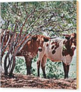 Young Bulls Wood Print