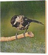 Young Chickadee Wood Print
