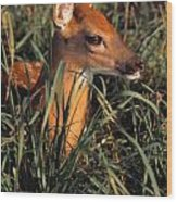 Young Deer Laying In Grass Wood Print