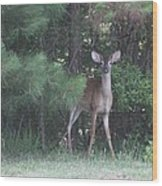 Young Deer Peering Out Of The Woods Wood Print