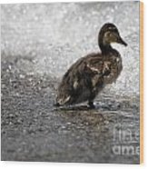 Young Duck On The Beach Wood Print