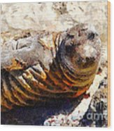 Young Elephant Seal  . 7d16091 Wood Print by Wingsdomain Art and Photography