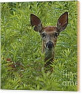 Young Fawn Playing Peek A Boo  Wood Print
