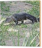 Young Gator On The Move Wood Print