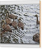 Young Geese Wood Print