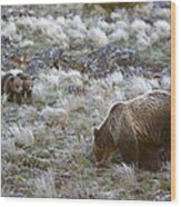 Young Grizzly Cubs Play As Their Mother Wood Print