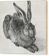 Young Hare, By Durer Wood Print